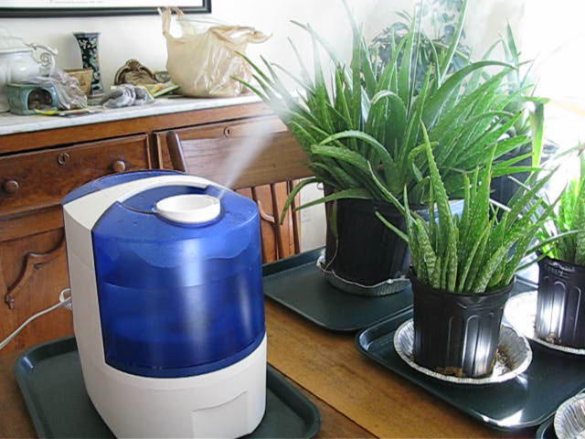 own humidifier